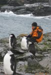 Dafila with chinstrap penguins
